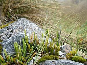Alpine plants & grass
