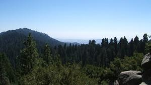 Largest grove of sequoias in the world
