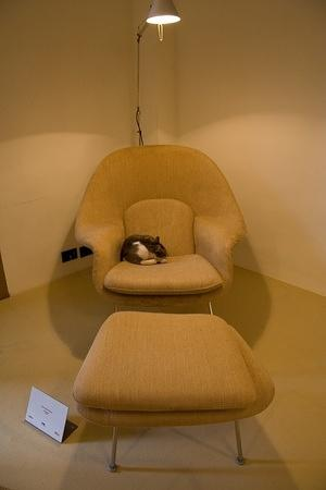 Stray cat sleeping in the museum's 1948 Eero Saarinen Womb chair