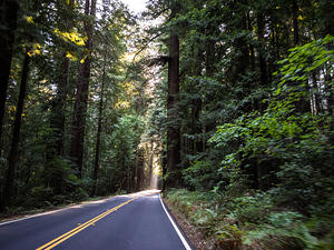Avenue of the Giants